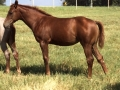 Metallic Gem, 2014 Filly