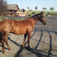 My Sophisticated CD, 2014 Gelding