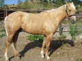 Sold - Emerald Shiner, 2008 Colt