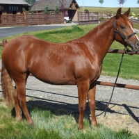 Sold - Peptoes Dun It, 2009 Filly